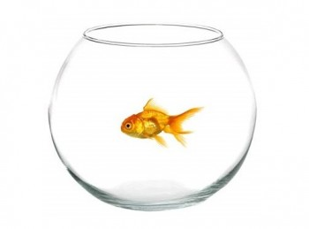 vaso boccia fiori acquario pesci